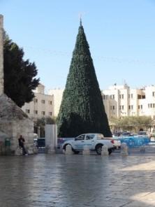 Der Weihnachtsbaum steht schon...