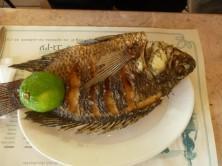 Petrusfisch - frisch gebraten