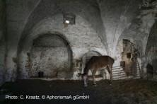 Stall zwischen Betlehem und Hebron