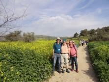 Auf dem Weg zum See Genezareth am blühenden Senfpflanzen-Feld