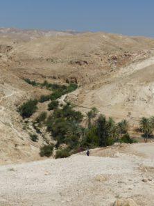 Oase im Wadi Qelt - Wasser ist Leben