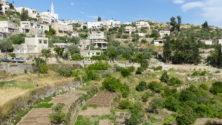 Gartenterrassen in Battir