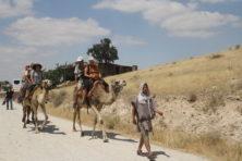 Vom Bus aufs Kamel