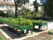 Kinderbeete im botanischen Garten Jerusalem