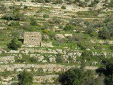 Landschaft bei Battir