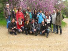 Unsere Reisegruppe vor einem blühenden Judasbaum (Cercis siliquastrum) in Neot Kedumim