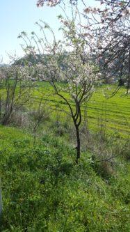 Wandern kann man in vielen Ländern - auch auf Zypern. Es gibt herrliche Wanderwege, die gerade im Frühling so schön sind